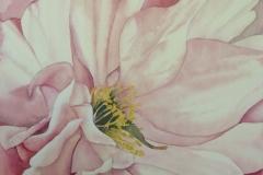 Blosson II