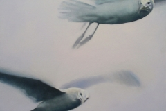 Gull-IV